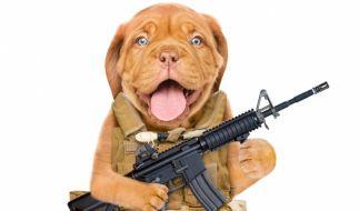 In den USA hat ein Hund seinem Herrchen beim Spielen ins Bein geschossen. (Symbolbild) (Foto)