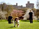 Knuffiges Sicherheitspersonal vom Windsor Castle: Diese Spürhunde patroullieren regelmäßig das Schlossgelände. (Foto)
