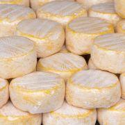 Ekel-Alarm! DIESER Käse ist mit Darmbakterien verseucht (Foto)