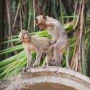 DIESE Affen bekommen Sex-Hilfe von Mama (Foto)