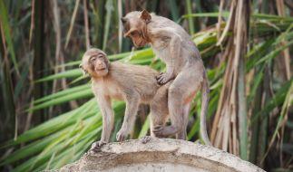 Die Tierwelt ist extrem versext. (Foto)