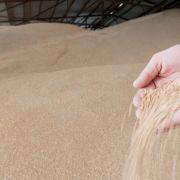 Bauer von herabfallendem Getreidesack getroffen - tot! (Foto)
