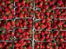 Eine Kundin machte in TK-Erdbeeren einen widerlichen Fund. (Foto)