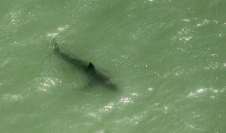 In Brasilien starb ein 18-Jähriger nach einer Hai-Attacke. (Foto)