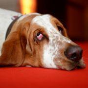 Widerlich! Mann wegen Hunde-Sex vor Gericht (Foto)