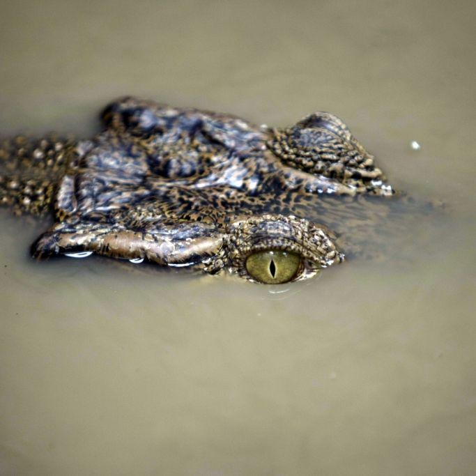 Krokodil verschlingt Pfarrer während der Taufe (Foto)