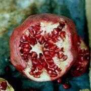 Tödliche Keime: Australierin stirbt an giftigem Obst (Foto)