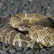 Wie im Horror-Film! Geköpfte Schlange attackiert Gärtner (Foto)