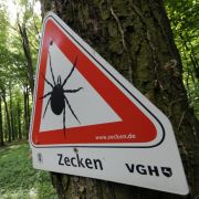 Tödliche Infektion? Die 5 größten Irrtümer über Zecken (Foto)