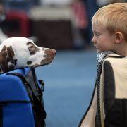 Irre Oma fährt Enkel in Hundeboxen spazieren (Foto)