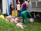 Tiertransport in Thüringen verunglückt