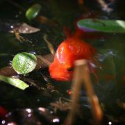Angler fängt Mutanten-Fisch mit Taubenkopf (Foto)