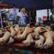 So widerwärtig ist dasHunde-Schlachtfest in China (Foto)
