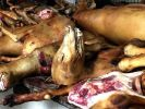 In China landen wieder Tausende Hunde im Kochtopf