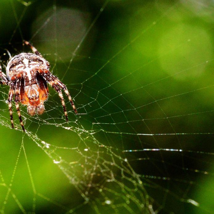 Vorsichtig, giftig! DIESE einheimischen Tiere sind tödlich (Foto)