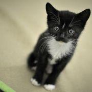 Bestie Mensch! Katze vor der Haustür ihres Halters abgeschlachtet! (Foto)