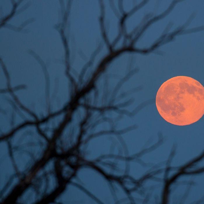 Gesehen? Roter Erdbeermond am Himmel (Foto)