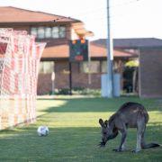 Ein tierischer Flitzer sorgt abseits des WM-Trubels für Action.