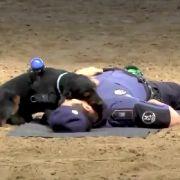 Polizei-Hund Poncho hat nicht eine Sekunde gezögert, um dem