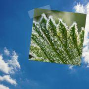 Frost-Gefahr nach Wochenend-Hitze (Foto)