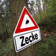 Hohes Risiko für Borreliose und FSME! Schützen Sie sich (Foto)