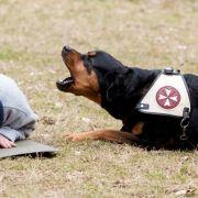 Ein Hund hat eine Seniorin im Urlaub gerettet.