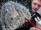 Der Biologe Dr. Götz-Bodo Reinicke zeigt eine mit dem Mikroskop angefertigte Abbildung einer Rippenqualle. (Foto)