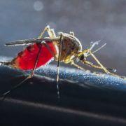 Gefährlich? DIESE Insekten vermiesen uns den Mega-Sommer (Foto)