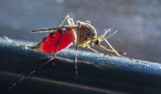 Sie sind die Schattenseite jedes Sommers: Mücken und anderes Ungeziefer, die sich an menschlichem Blut laben. (Foto)