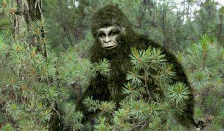 So stellt sich der Volksglaube den geheimnisvollen Bigfoot vor, der angeblich in den Wäldern der USA sein Unwesen treibt. (Foto)