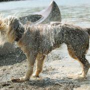 Hundstage bringen Hitzewelle! SO heiß wird es jetzt in Deutschland (Foto)