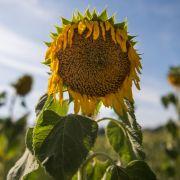 Hitze-Horror in Deutschland! DWD warnt vor gefährlicher Hitzewelle (Foto)