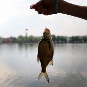 Gruselig! Horror-Fisch mit Menschenzähnen gefangen (Foto)