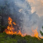 Feuer-Hölle im Wald! SO verhalten Sie sich richtig (Foto)