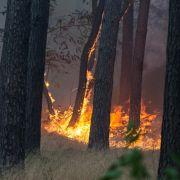 Sperrung der A9 wegen Waldbrand beendet (Foto)