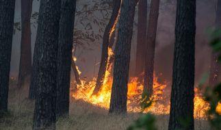 In dem Waldstück zwischen Dreieck Potsdam und Fichtenwalde ist ein Waldbrand ausgebrochen. (Foto)