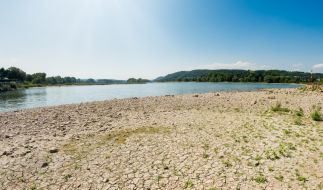 Durch die langanhaltende Hitze ist der Uferbereich des Rheins ganz ausgetrocknet. (Foto)