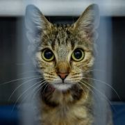 Eine Katze ist in Baden-Württemberg bei Bauarbeiten übersehen und unter einer Garage einbetoniert worden.