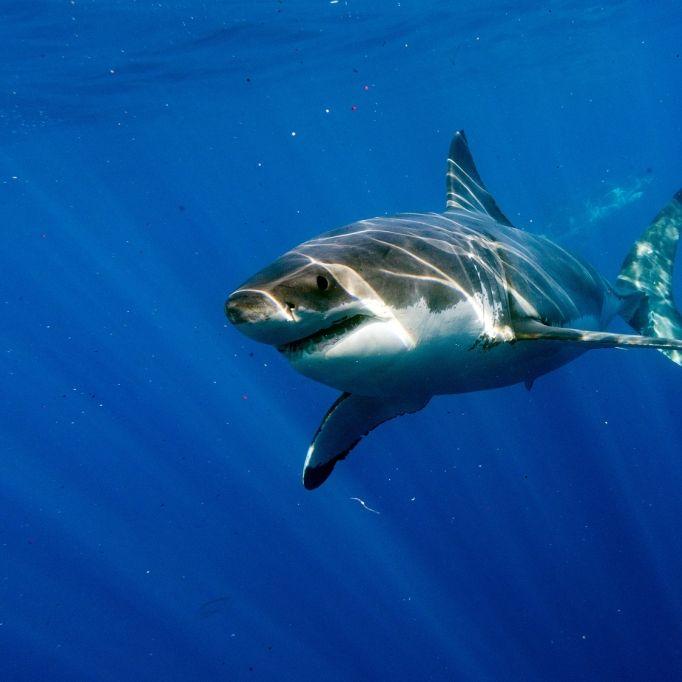Tourist stirbt nach Hai-Angriff in Ägypten (Foto)