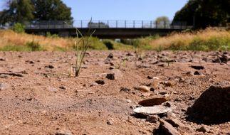 Wegen der Trockenheit und des heißen Wetters ist die Schwarze Elster im Süden Brandenburgs stellenweise trocken. (Foto)
