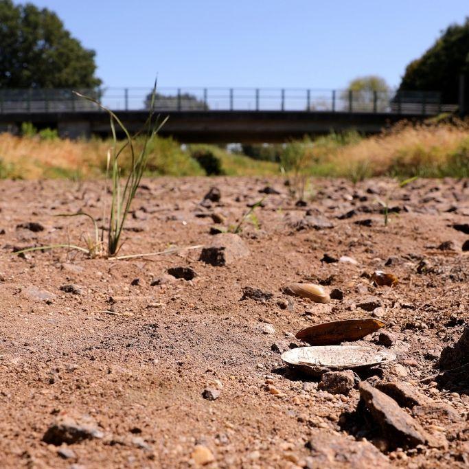 Wegen der Horror-Hitze sterben Schwäne - Flüsse trocknen aus (Foto)