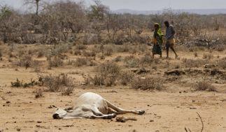 Die Gefahr einer Heißzeit kann aus Sicht von Klimaforschern selbst beim Einhalt des Pariser Klimaabkommens nicht abgewendet werden. (Foto)