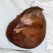 Dieses Eichhörnchen jagte einen Mann durch Karlsruhe!