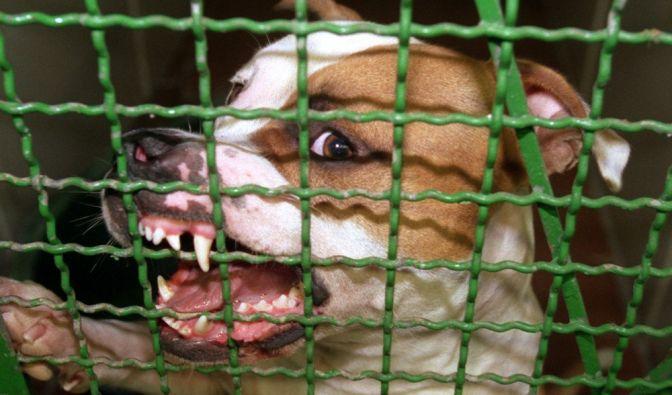 Tödliche Kampfhund-Attacke