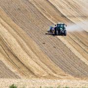 Rekord-Sommer! Verwandelt sich Deutschland jetzt in eine Wüste? (Foto)