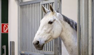 In Gütersloh wurde ein Pferd von Unbekannten am Oberschenkel verletzt (Symbolbild). (Foto)