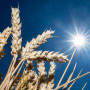 Dürre-Schock! Ende der Trockenheit NICHT in Sicht (Foto)
