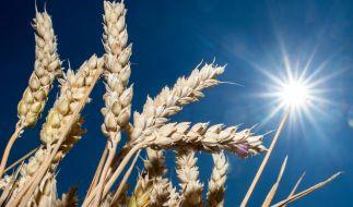 Obwohl das Wetter wechselhafter wird, bleibt Deutschland die Dürre erhalten. (Foto)