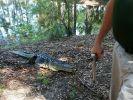 Eine Frau ist beim Ausführen ihres Hundes von einem Alligator getötet worden. (Foto)
