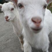 Fast 1.500 Mal! Perverses Farm-Trio hat Sex mit Tieren (Foto)